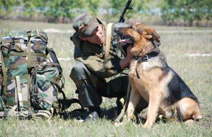 История охраны границы на Алтае: от дивизии – до погранотряда